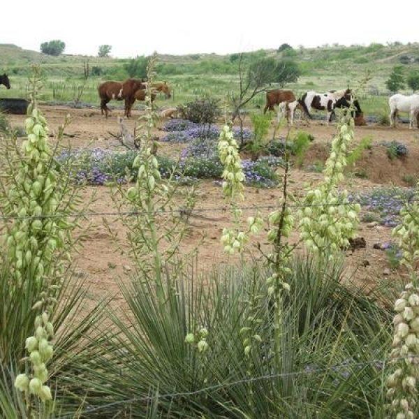 עדר הסוסים והרשת החברתית