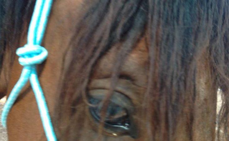 פיתוח תודעה בעזרת סוסים